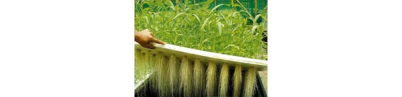 Aeroponica - sistemi coltivazione indoor Garden West GrowShop Milano