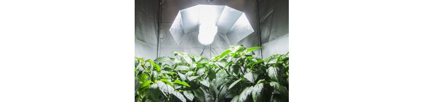 Kit Grow Box base - Kit coltivazione indoor GardenWest Growshop milano