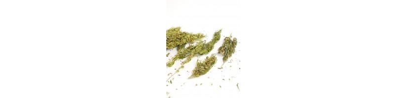 Prodotti di Canapa - Canapa Legale Garden West GrowShop Milano