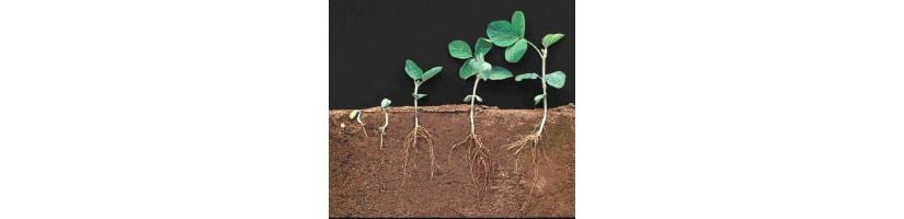 Radicazione taleaggio - Garden West GrowShop